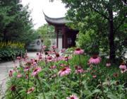 Ugyanakkor érdemes tanulnunk a kínai kertművészektől: arányérzéket, harmóniát és a természethez való alkalmazkodást.
