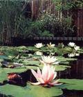 Ahol a Qi tiszta vizet talál, ott megpihen, ezért nagyon kedvező, ha kertedben kis kanyargós patak van.