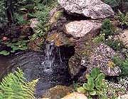 Ahol a Qi tiszta vizet talál, ott megpihen, ezért nagyon kedvező, ha kertedben kis vízesés van.