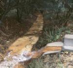 Mérgező nyilak a kertben: A szennyezett, piszkos víz