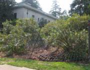 Mérgező nyilak a kertben: A kidőlt kerítés