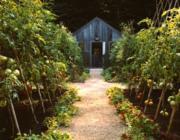 Mérgező nyilak a kertben: Nyílegyenes utak