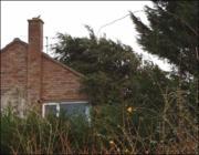 Mérgező nyilak a kertben: Korhadt, kidőlt fák