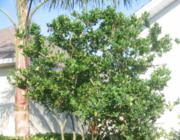Mérgező nyilak a kertben: Fák a bejárat előtt