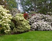 A kert baloldalán (házból kifelé nézve) magas bokrokat ültetsz, míg a jobb oldalon kicsit alacsonyabban fehér virágokat.