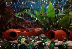 Fontos, hogy a vizet tartsuk mindig tisztán az aqváriumban
