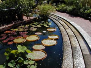A Jang – nyári – hónapokban biztosítani szükséges a kert számára is a Jin, hűsítő, víz elemet.