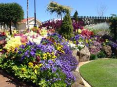 Alkalmazhatod a virágok színének megválasztásánál.