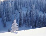 Havas téli táj: Milyen a Víz és a Fa kapcsolata?
