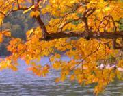 Folyópart összel: Milyen a Víz és a Fa kapcsolata?