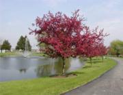 Virágzó fa a tóparton: Milyen a Víz és a Fa kapcsolata?