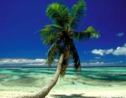 Pálmafa a tengerparton: Milyen a Víz és a Fa kapcsolata?