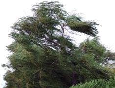 Milyen a széljárás?