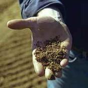 Vizsgáljuk meg a talaj minőségét.