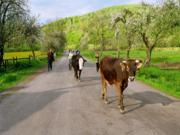 Üzleti siker feng shui: vidéken is lényeges a forgalom